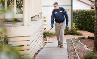 Effective Pest Control Services in Toronto