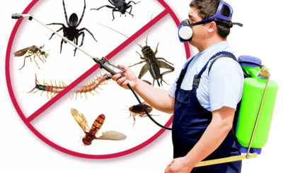 What Really Works When It Comes to Bed Bugs Removal?