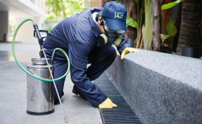 Why Are Termite Inspections Sydney So Important